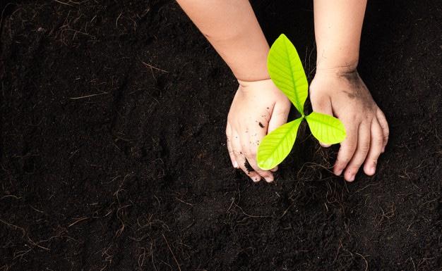 植物を植える