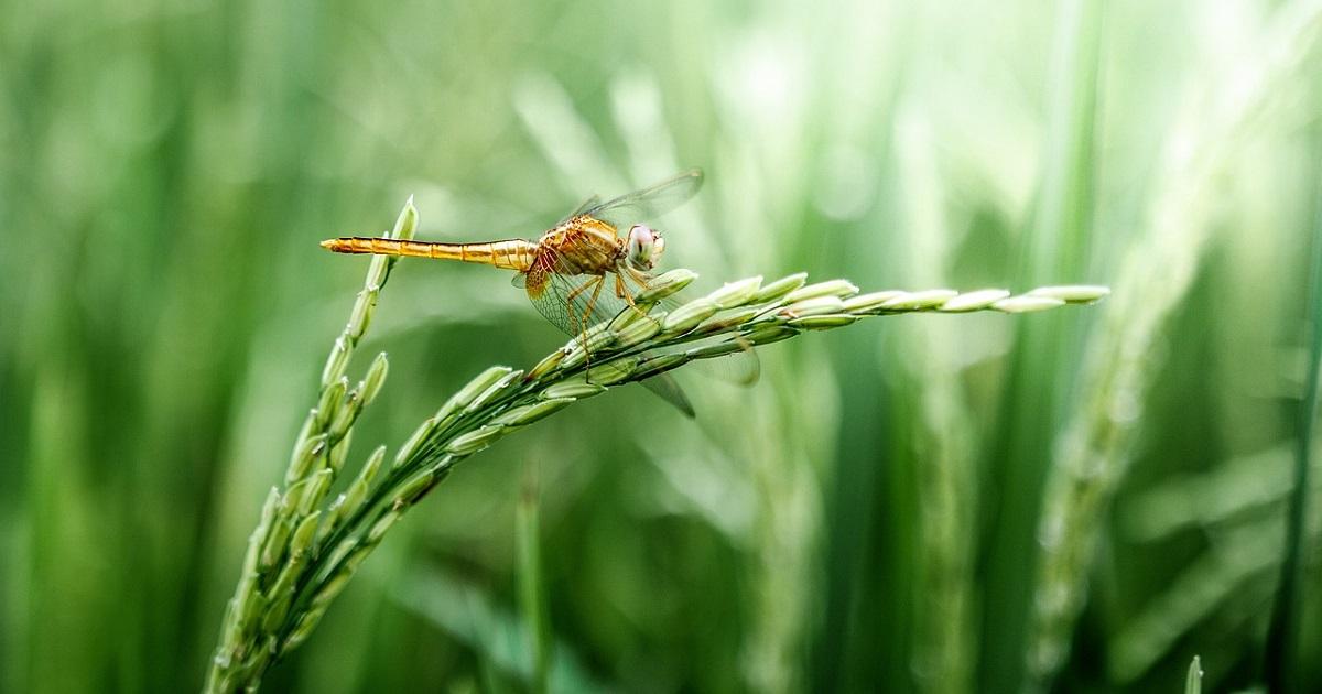 dragonfly-2551460_1280