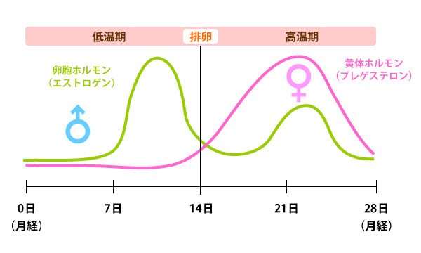 女性ホルモン02