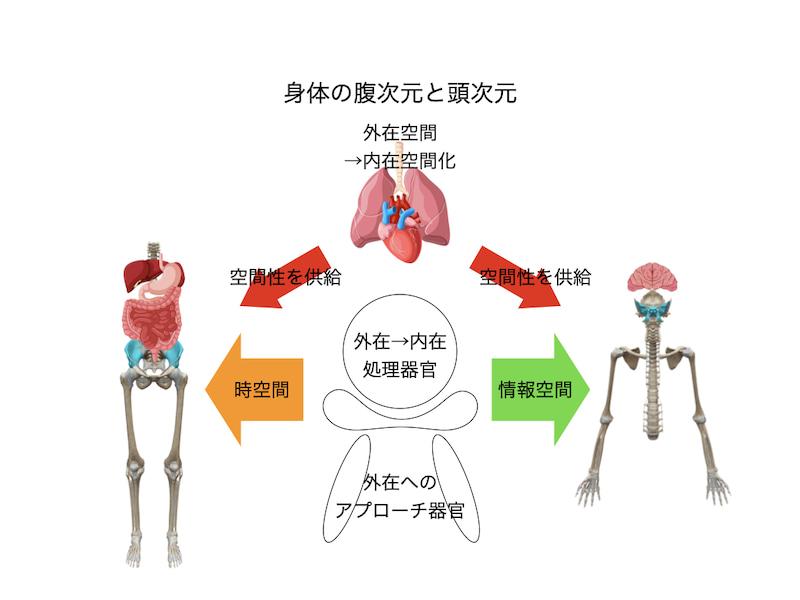 腹身体と頭身体